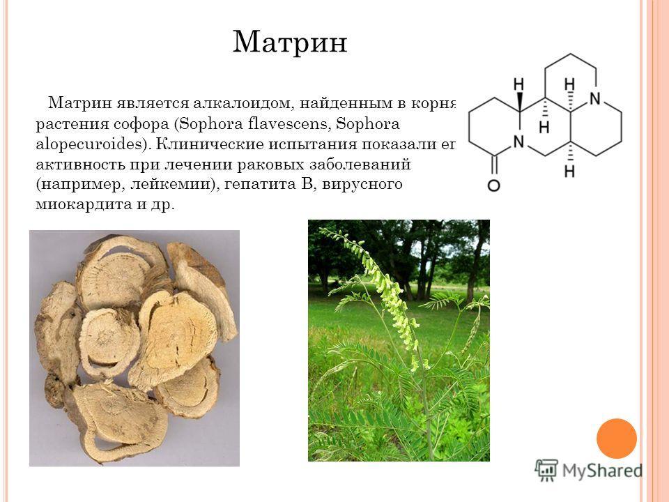 Матрин является алкалоидом, найденным в корнях растения софора (Sophora flavescens, Sophora alopecuroides). Клинические испытания показали его активность при лечении раковых заболеваний (например, лейкемии), гепатита В, вирусного миокардита и др. Мат