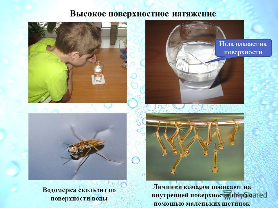 Высокое поверхностное натяжение Игла плавает на поверхности Водомерка скользит по поверхности воды Личинки комаров повисают на внутренней поверхности воды с помощью маленьких щетинок
