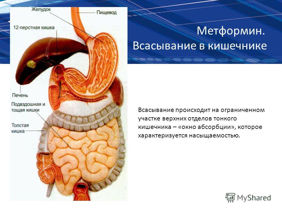 Метформин. Всасывание в кишечнике Всасывание происходит на ограниченном участке верхних отделов тонкого кишечника – «окно абсорбции», которое характеризуется насыщаемостью.