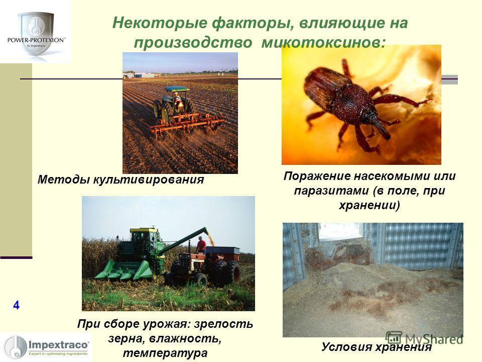 Методы культивирования При сборе урожая: зрелость зерна, влажность, температура Условия хранения Поражение насекомыми или паразитами (в поле, при хранении) Некоторые факторы, влияющие на производство микотоксинов: 4