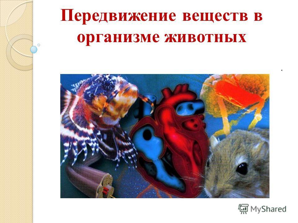 Передвижение веществ в организме животных.