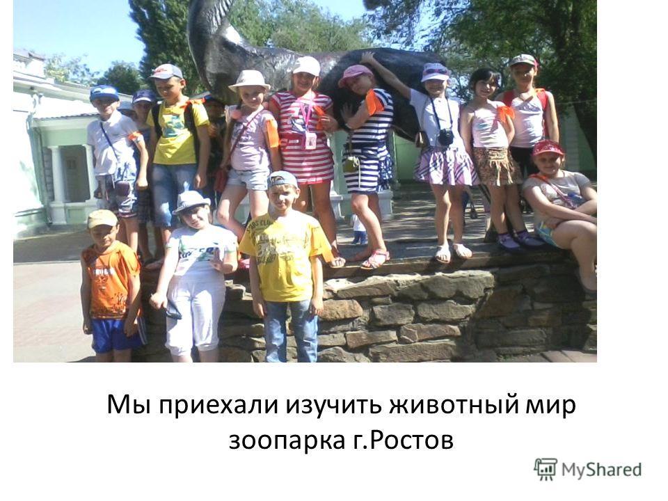 Мы приехали изучить животный мир зоопарка г.Ростов