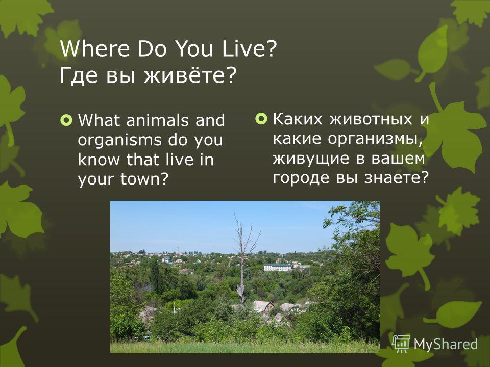 Where Do You Live? Где вы живëте? What animals and organisms do you know that live in your town? Каких животных и какие организмы, живущие в вашем городе вы знаете?