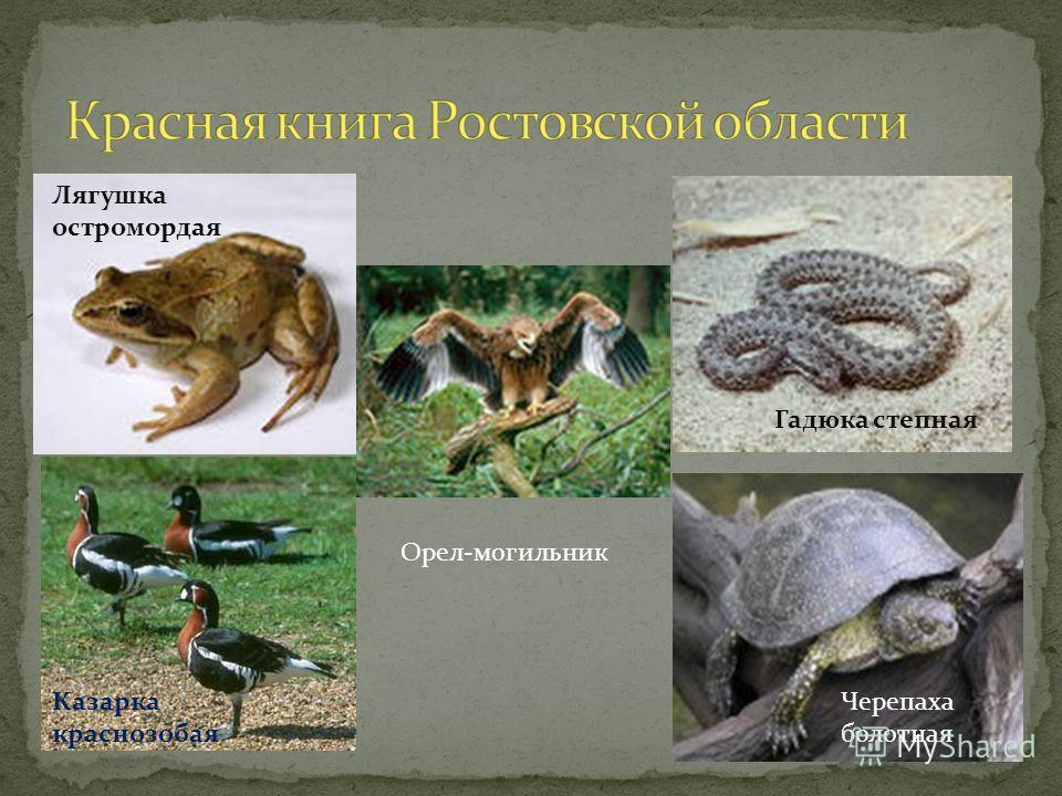 Лягушка остромордая Гадюка степная Черепаха болотная Казарка краснозобая Орел-могильник