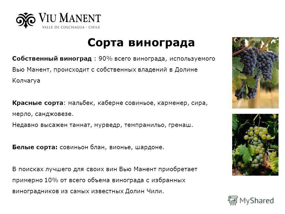 Собственный виноград : 90% всего винограда, используемого Вью Манент, происходит с собственных владений в Долине Колчагуа Красные сорта: мальбек, каберне совиньое, карменер, сира, мерло, санджовезе. Недавно высажен таннат, мурведр, темпранильо, грена