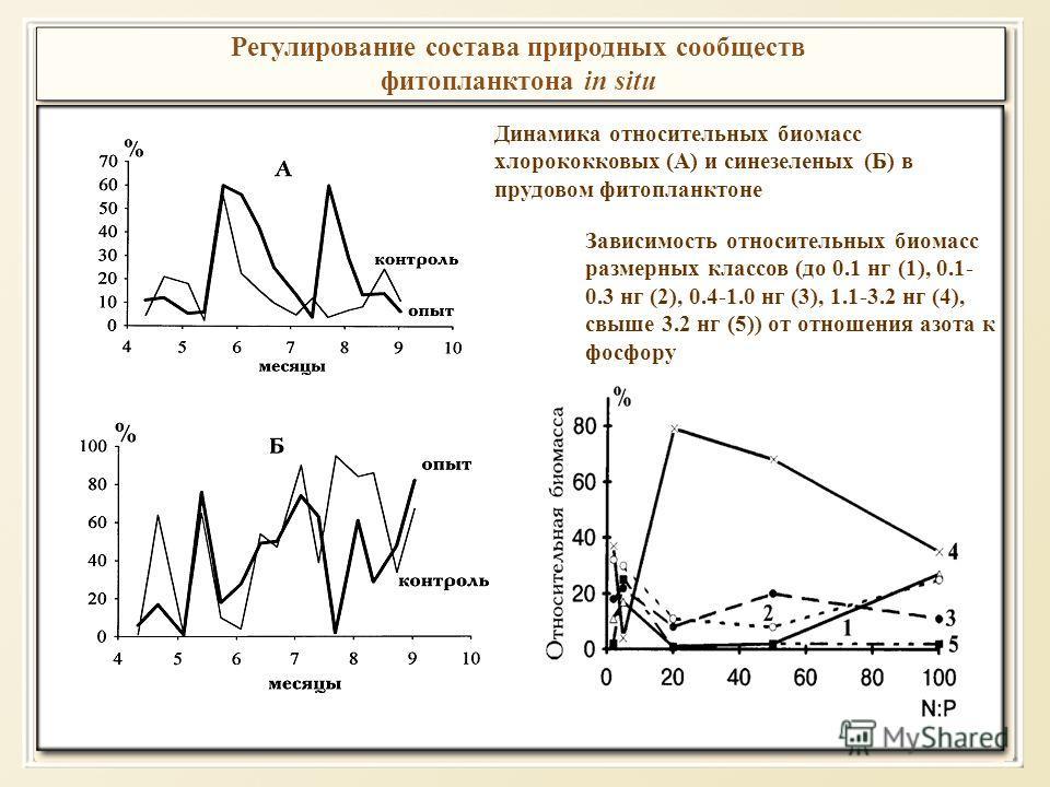 Регулирование состава природных сообществ фитопланктона in situ Динамика относительных биомасс хлорококковых (A) и синезеленых (Б) в прудовом фитопланктоне Зависимость относительных биомасс размерных классов (до 0.1 нг (1), 0.1- 0.3 нг (2), 0.4-1.0 н
