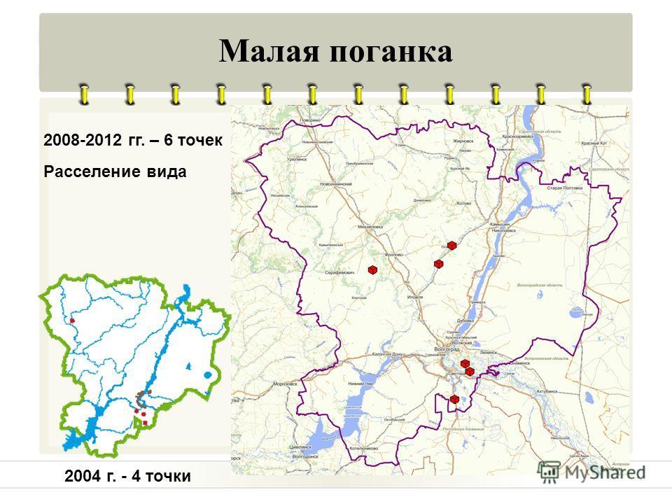 Малая поганка Расселение вида 2004 г. - 4 точки 2008-2012 гг. – 6 точек