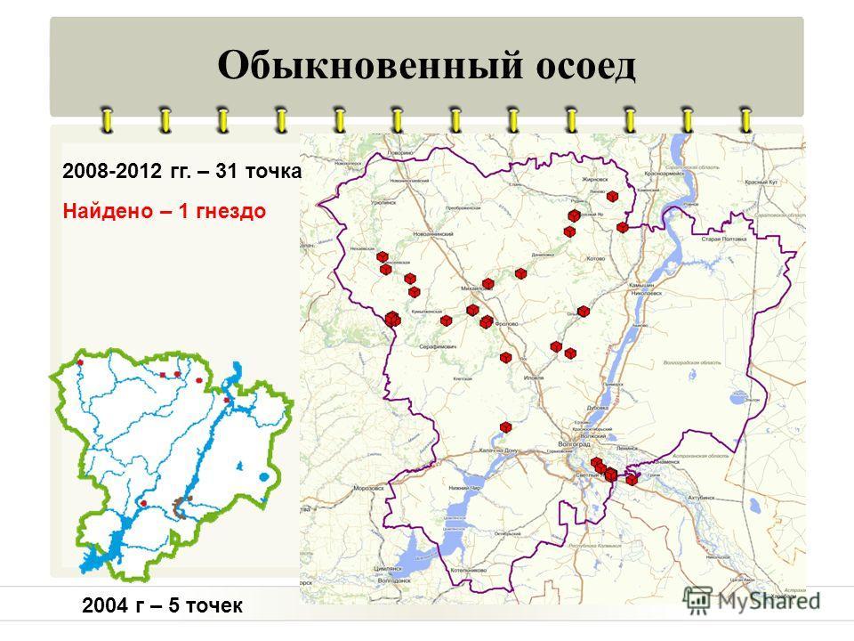 Обыкновенный осоед 2004 г – 5 точек 2008-2012 гг. – 31 точка Найдено – 1 гнездо