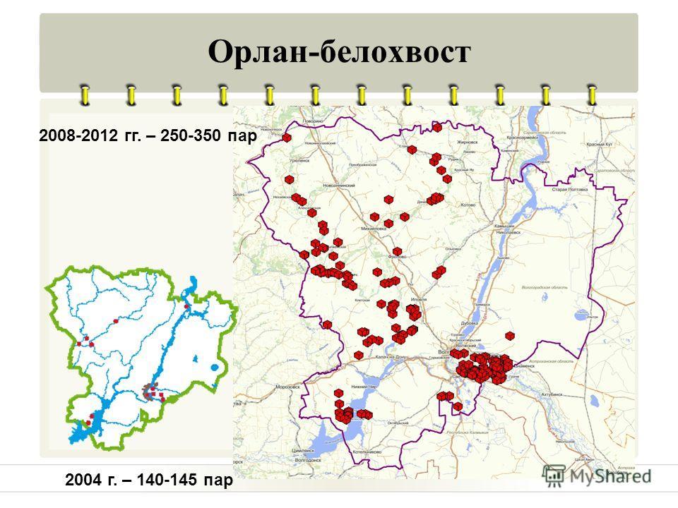 Орлан-белохвост 2008-2012 гг. – 250-350 пар 2004 г. – 140-145 пар