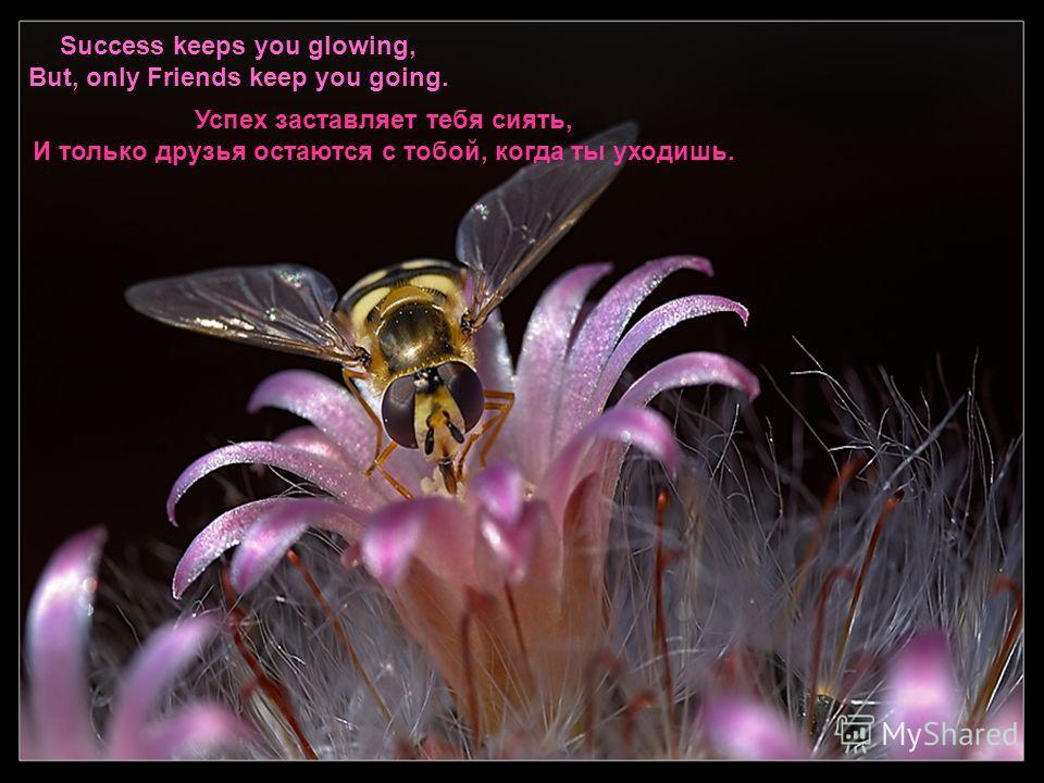 Happiness keeps you sweet, Trials keep you strong. Sorrows keep you Human, Life keeps you humble. Счастье делает тебя приветливым, Испытания делают тебя сильным, Страдание делает тебя человечным, Жизнь учит тебя кротости,