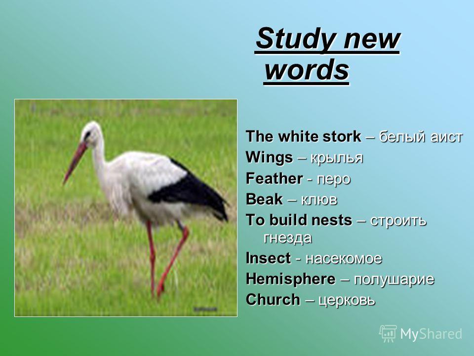 Study new words Study new words The white stork – белый аист Wings – крылья Feather - перо Beak – клюв To build nests – строить гнезда Insect - насекомое Hemisphere – полушарие Church – церковь