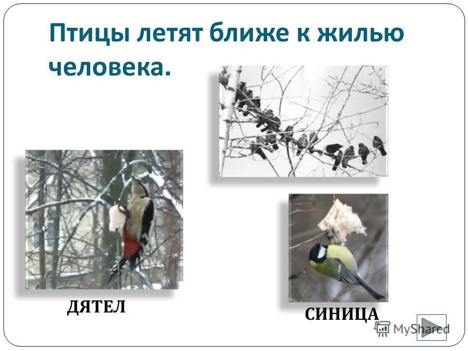 Только животным тяжело в зимнюю стужу. БЕЛКА КОСУЛИ СНЕГИРЬ ВОРОБЕЙ