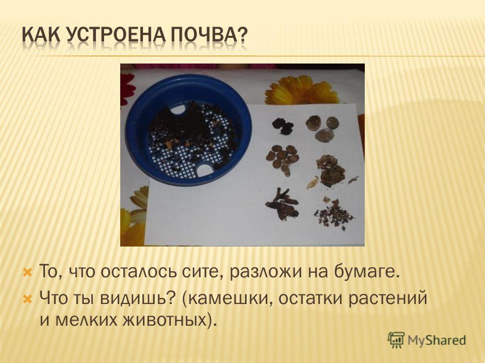 То, что осталось сите, разложи на бумаге. Что ты видишь? (камешки, остатки растений и мелких животных).