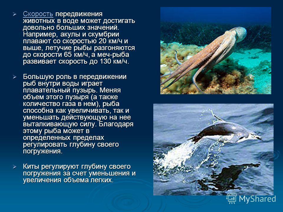 Скорость передвижения животных в воде может достигать довольно больших значений. Например, акулы и скумбрии плавают со скоростью 20 км/ч и выше, летучие рыбы разгоняются до скорости 65 км/ч, а меч-рыба развивает скорость до 130 км/ч. Скорость передви