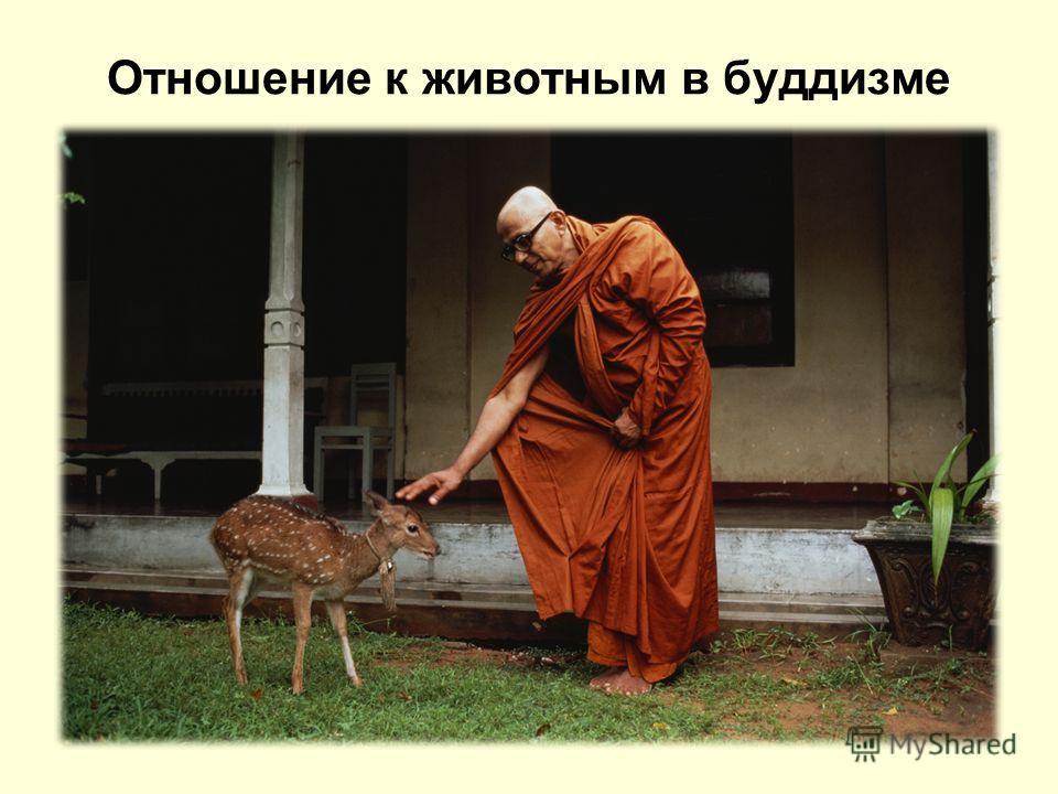 Отношение к животным в буддизме