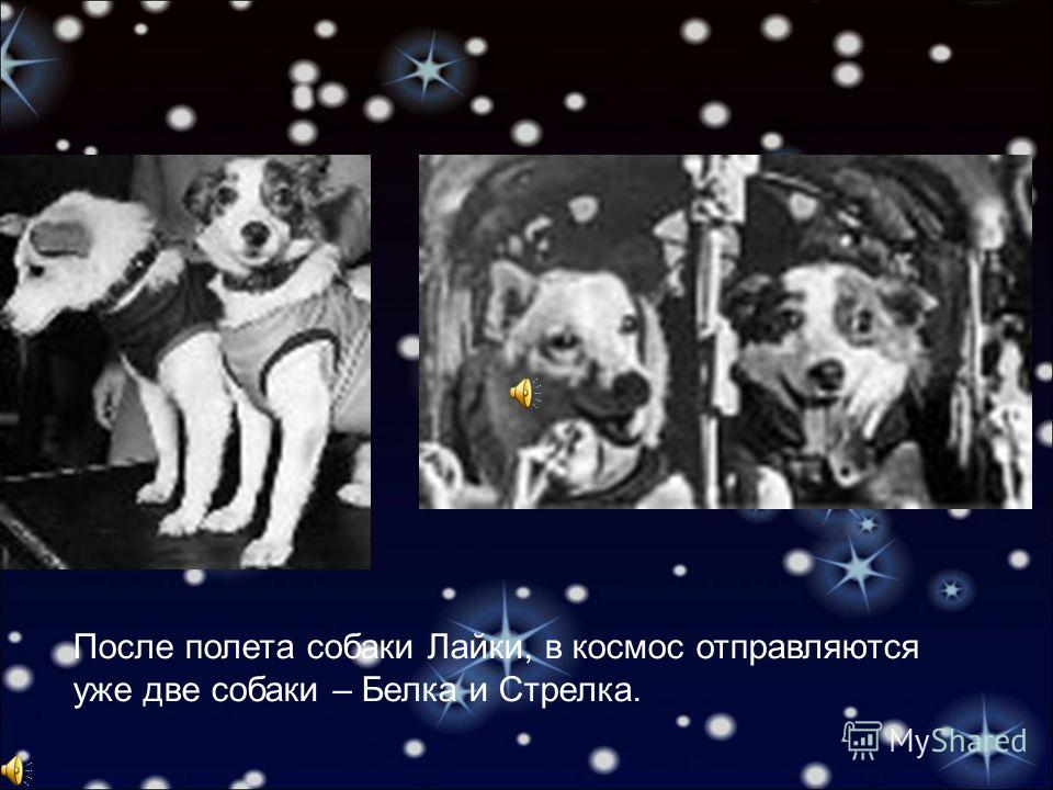 После полета собаки Лайки, в космос отправляются уже две собаки – Белка и Стрелка.
