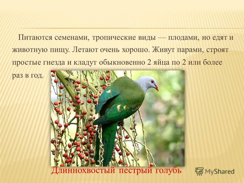 Питаются семенами, тропические виды плодами, но едят и животную пищу. Летают очень хорошо. Живут парами, строят простые гнезда и кладут обыкновенно 2 яйца по 2 или более раз в год. Длиннохвостый пестрый голубь