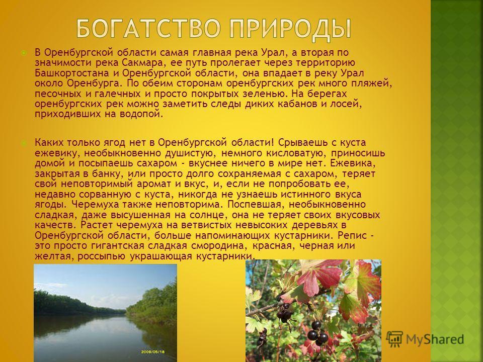 В Оренбургской области самая главная река Урал, а вторая по значимости река Сакмара, ее путь пролегает через территорию Башкортостана и Оренбургской области, она впадает в реку Урал около Оренбурга. По обеим сторонам оренбургских рек много пляжей, пе