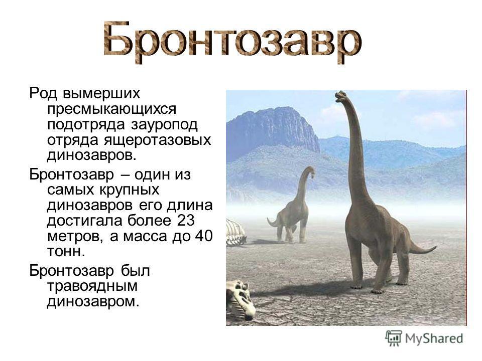 Род вымерших пресмыкающихся подотряда зауропод отряда ящеротазовых динозавров. Бронтозавр – один из самых крупных динозавров его длина достигала более 23 метров, а масса до 40 тонн. Бронтозавр был травоядным динозавром.