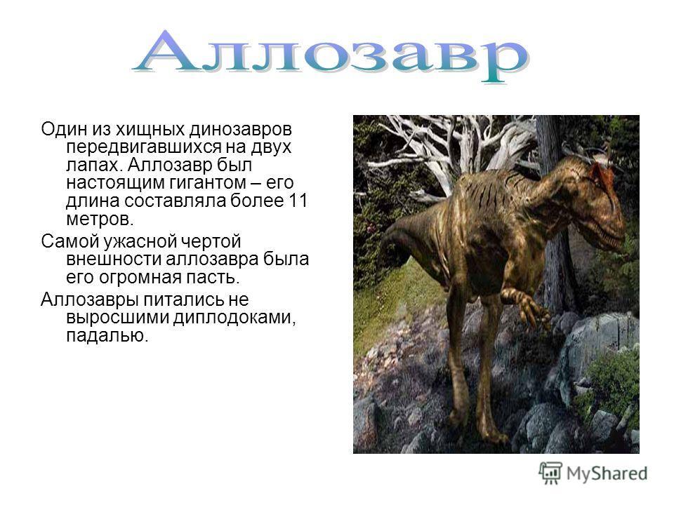 Один из хищных динозавров передвигавшихся на двух лапах. Аллозавр был настоящим гигантом – его длина составляла более 11 метров. Самой ужасной чертой внешности аллозавра была его огромная пасть. Аллозавры питались не выросшими диплодоками, падалью.