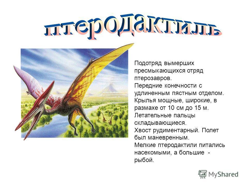 Подотряд вымерших пресмыкающихся отряд птерозавров. Передние конечности с удлиненным пястным отделом. Крылья мощные, широкие, в размахе от 10 см до 15 м. Летательные пальцы складывающиеся. Хвост рудиментарный. Полет был маневренным. Мелкие птеродакти