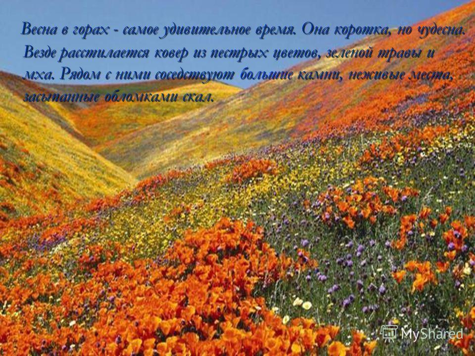 Весна в горах - самое удивительное время. Она коротка, но чудесна. Везде расстилается ковер из пестрых цветов, зеленой травы и мха. Рядом с ними соседствуют большие камни, неживые места, засыпанные обломками скал. Весна в горах - самое удивительное в