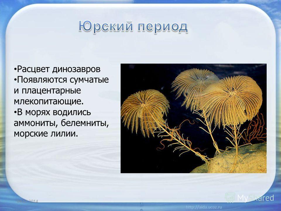 09.11.201417 Расцвет динозавров Появляются сумчатые и плацентарные млекопитающие. В морях водились аммониты, белемниты, морские лилии.