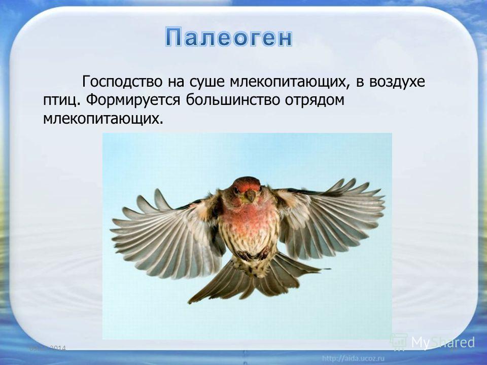 09.11.201422 Господство на суше млекопитающих, в воздухе птиц. Формируется большинство отрядом млекопитающих.