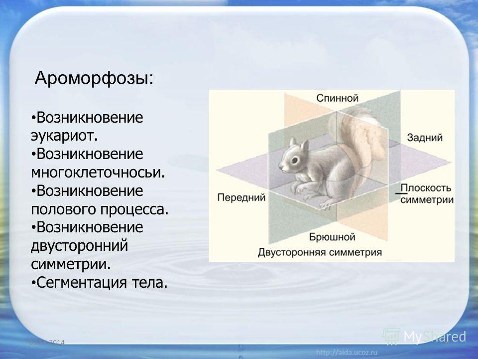 09.11.20146 Ароморфозы: Возникновение эукариот. Возникновение многоклеточносьи. Возникновение полового процесса. Возникновение двусторонний симметрии. Сегментация тела.