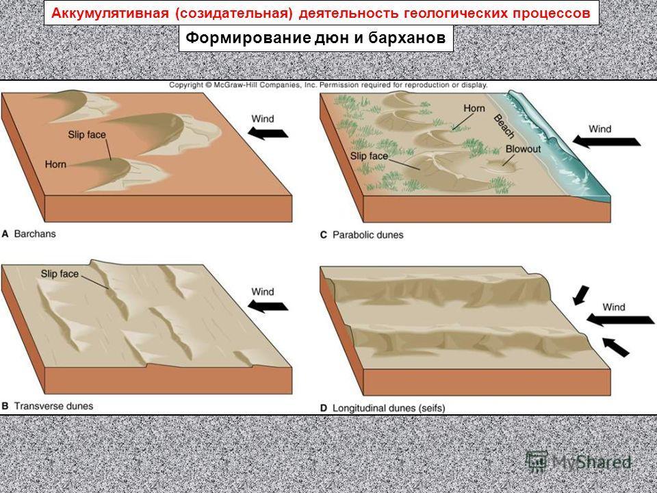 Формирование дюн и барханов Аккумулятивная (созидательная) деятельность геологических процессов