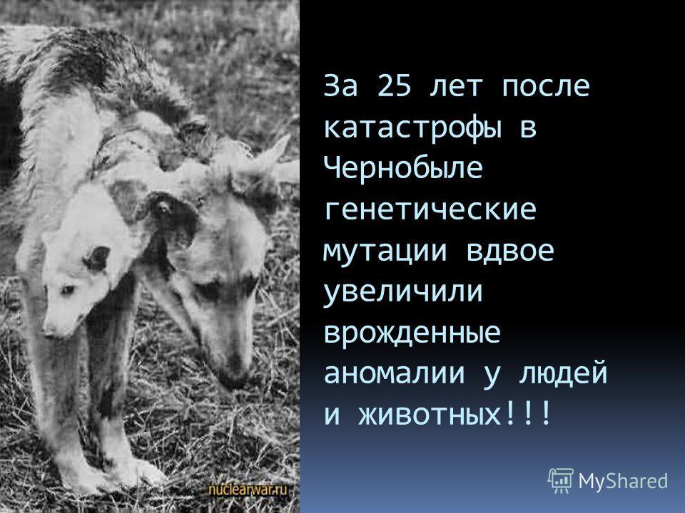 За 25 лет после катастрофы в Чернобыле генетические мутации вдвое увеличили врожденные аномалии у людей и животных!!!
