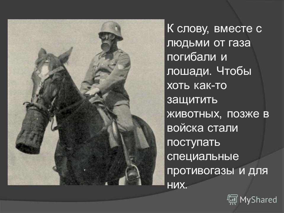 К слову, вместе с людьми от газа погибали и лошади. Чтобы хоть как-то защитить животных, позже в войска стали поступать специальные противогазы и для них.
