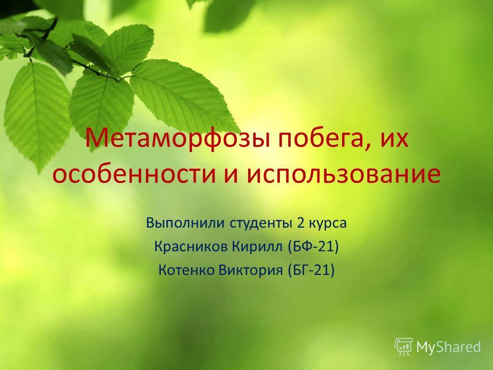 Метаморфозы побега, их особенности и использование Выполнили студенты 2 курса Красников Кирилл (БФ-21) Котенко Виктория (БГ-21)