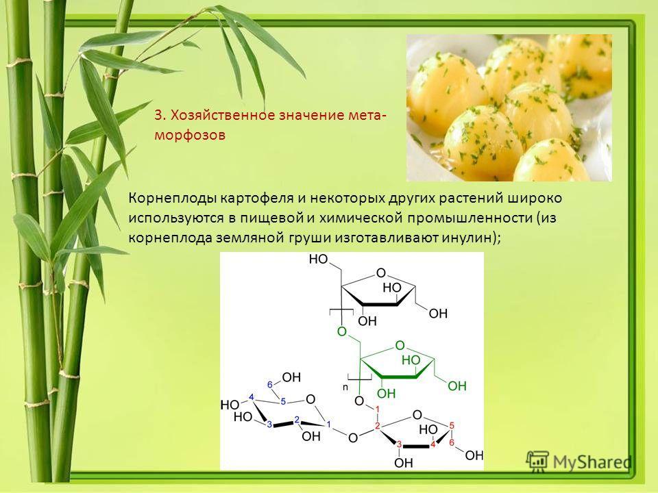 Корнеплоды картофеля и некоторых других растений широко используются в пищевой и химической промышленности (из корнеплода земляной груши изготавливают инулин); 3. Хозяйственное значение мета- морфозов