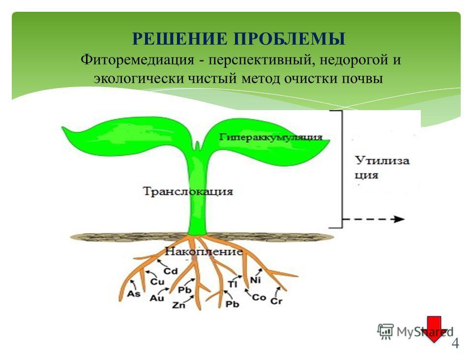 4 РЕШЕНИЕ ПРОБЛЕМЫ Фиторемедиация - перспективный, недорогой и экологически чистый метод очистки почвы 4