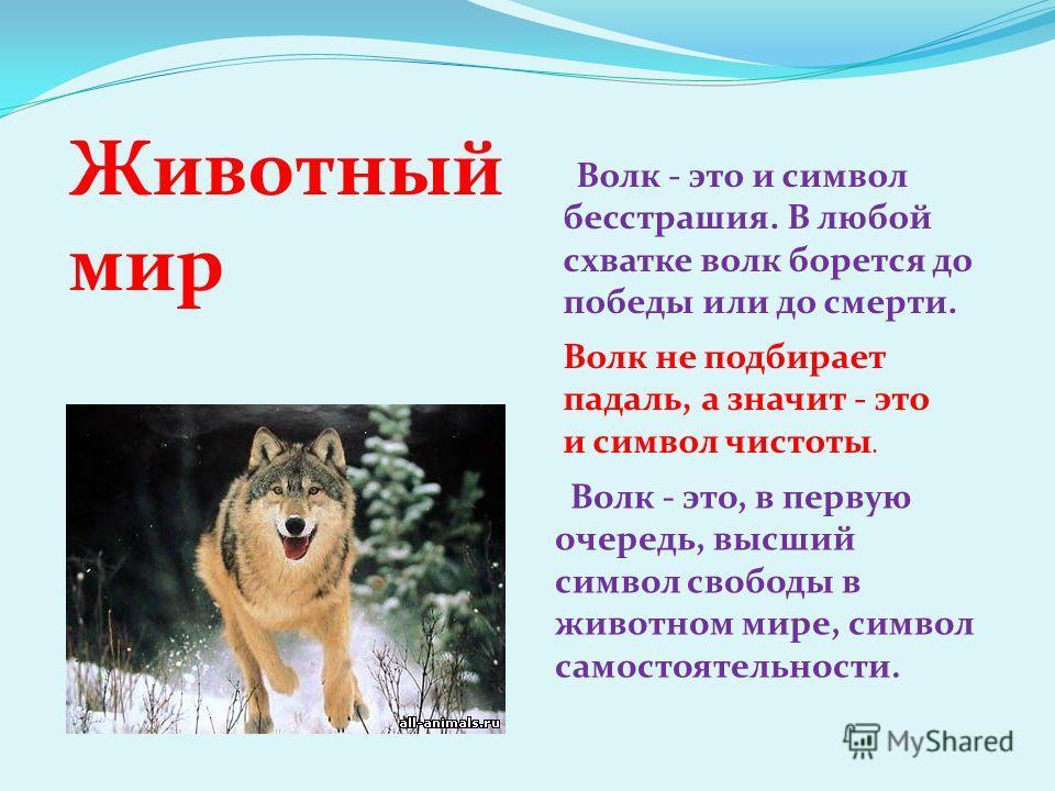 Волк - это, в первую очередь, высший символ свободы в животном мире, символ самостоятельности. Волк - это и символ бесстрашия. В любой схватке волк борется до победы или до смерти. Волк не подбирает падаль, а значит - это и символ чистоты. Животный м