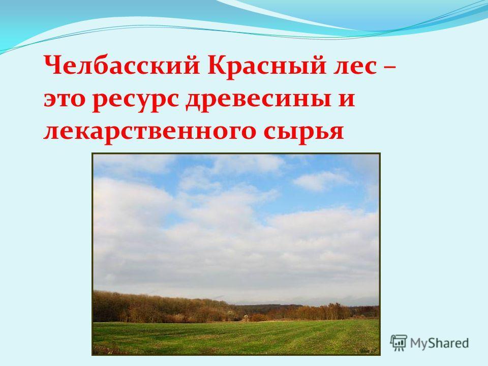Челбасский Красный лес – это ресурс древесины и лекарственного сырья