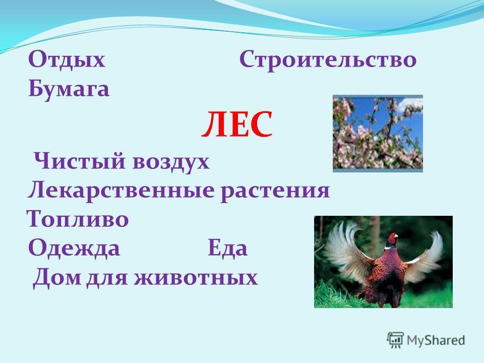 Отдых Строительство Бумага ЛЕС Чистый воздух Лекарственные растения Топливо Одежда Еда Дом для животных