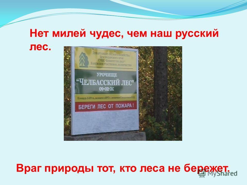 Нет милей чудес, чем наш русский лес. Враг природы тот, кто леса не бережет.
