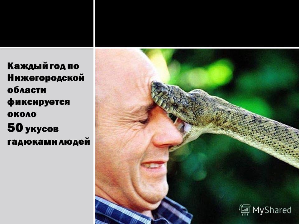 Каждый год по Нижегородской области фиксируется около 50 укусов гадюками людей