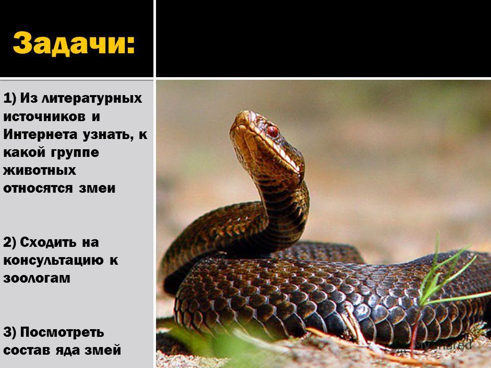 Задачи: 1) Из литературных источников и Интернета узнать, к какой группе животных относятся змеи 2) Сходить на консультацию к зоологам 3) Посмотреть состав яда змей