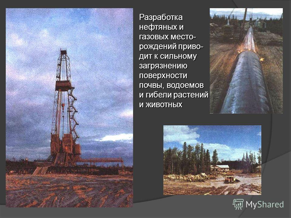 Разработка нефтяных и газовых место- рождений приво- дит к сильному загрязнению поверхности почвы, водоемов и гибели растений и животных