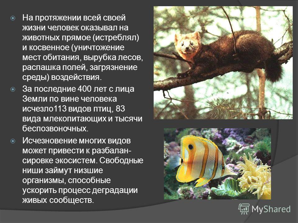 На протяжении всей своей жизни человек оказывал на животных прямое (истреблял) и косвенное (уничтожение мест обитания, вырубка лесов, распашка полей, загрязнение среды) воздействия. За последние 400 лет с лица Земли по вине человека исчезло 113 видов