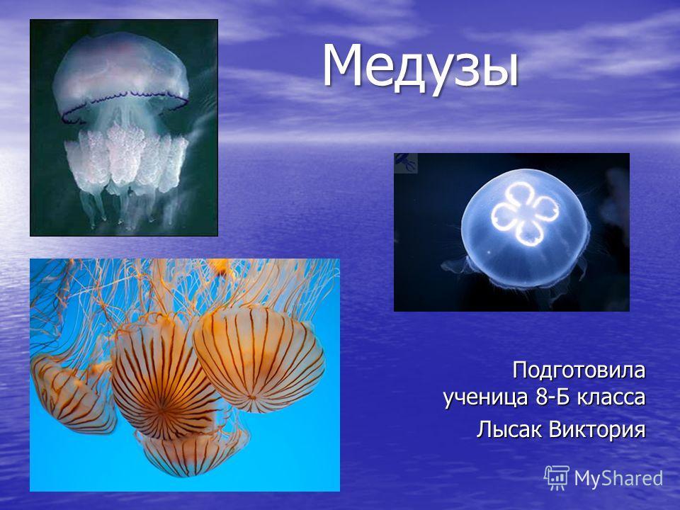 Медузы Подготовила ученица 8-Б класса Лысак Виктория