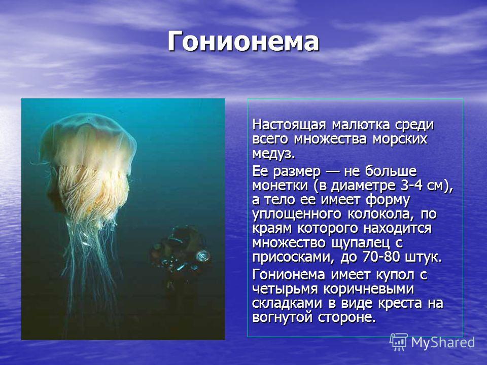 Гонионема Настоящая малютка среди всего множества морских медуз. Ее размер не больше монетки (в диаметре 3-4 см), а тело ее имеет форму уплощенного колокола, по краям которого находится множество щупалец с присосками, до 70-80 штук. Гонионема имеет к