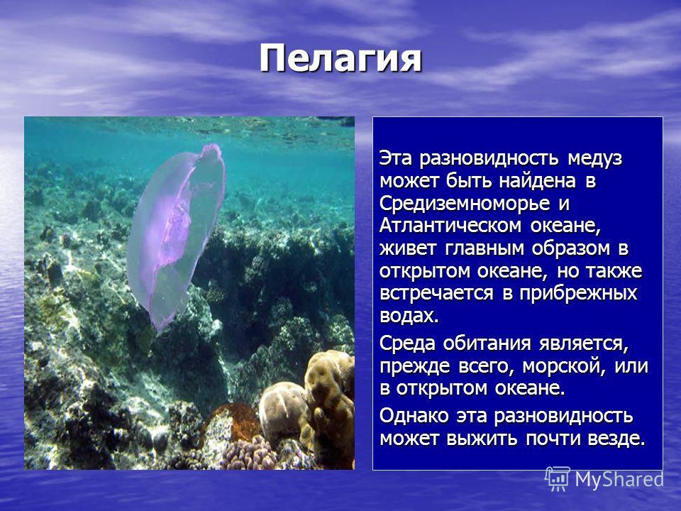 Пелагия Эта разновидность медуз может быть найдена в Средиземноморье и Атлантическом океане, живет главным образом в открытом океане, но также встречается в прибрежных водах. Среда обитания является, прежде всего, морской, или в открытом океане. Одна