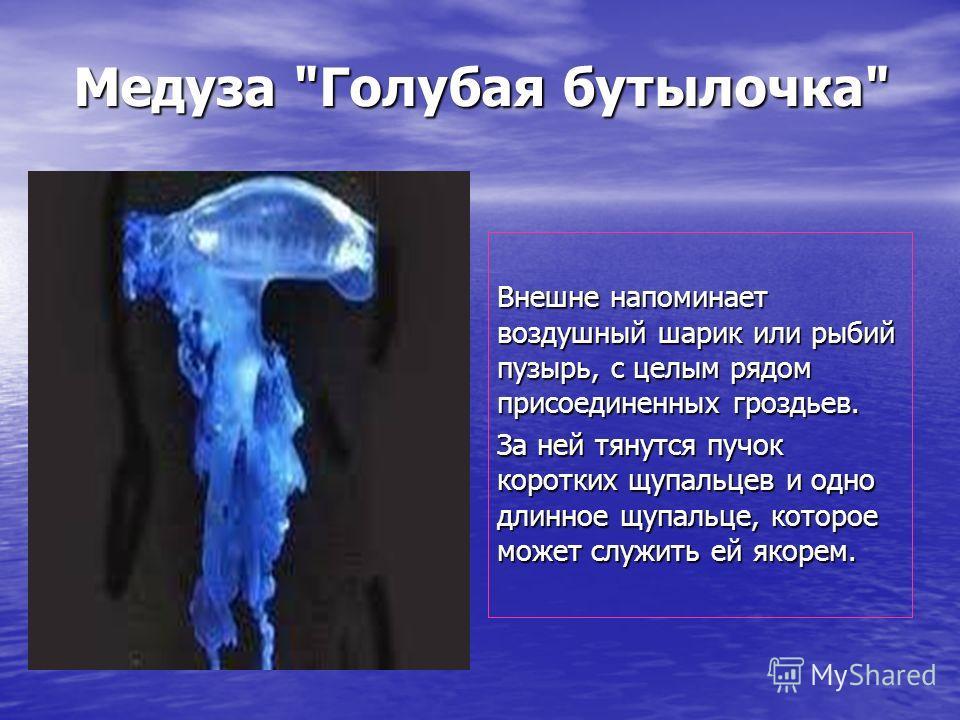 Медуза Голубая бутылочка Внешне напоминает воздушный шарик или рыбий пузырь, с целым рядом присоединенных гроздьев. За ней тянутся пучок коротких щупальцев и одно длинное щупальце, которое может служить ей якорем.