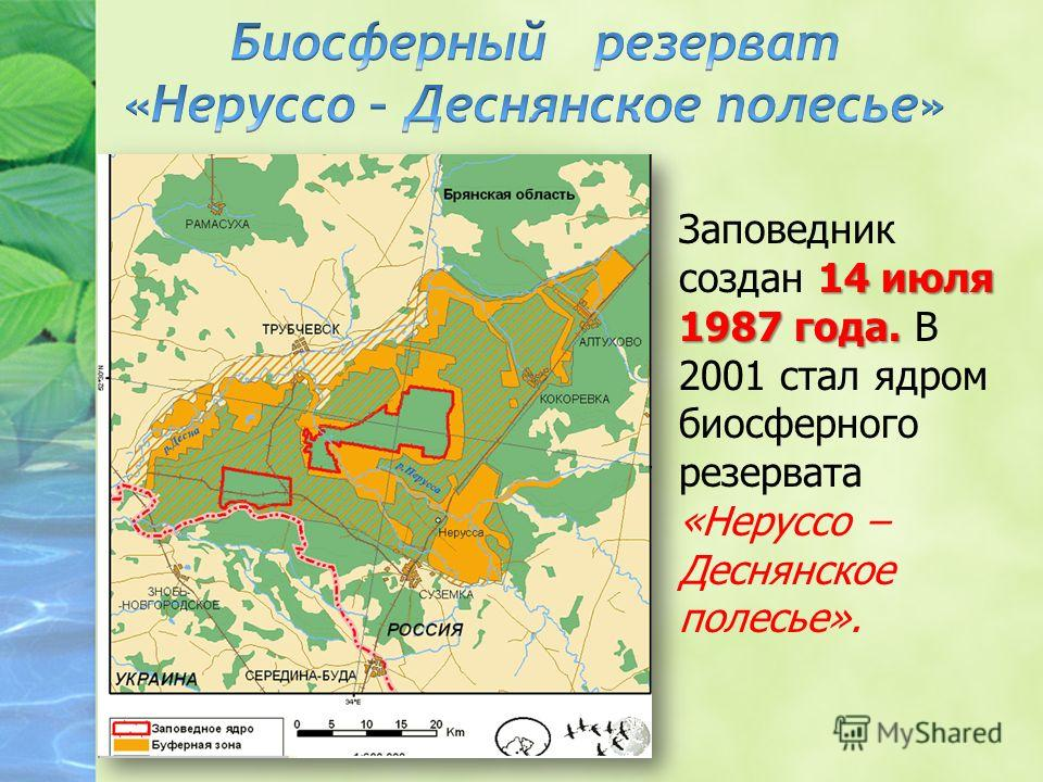 14 июля 1987 года. Заповедник создан 14 июля 1987 года. В 2001 стал ядром биосферного резервата «Неруссо – Деснянское полесье».