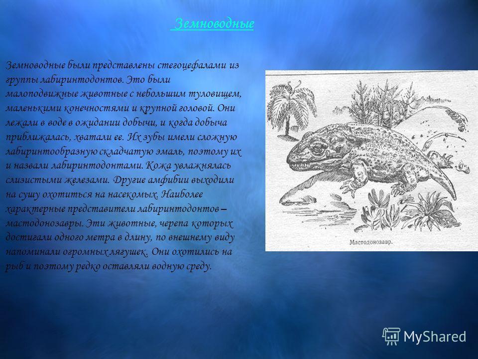 Земноводные были представлены стегоцефалами из группы лабиринтодонтов. Это были малоподвижные животные с небольшим туловищем, маленькими конечностями и крупной головой. Они лежали в воде в ожидании добычи, и когда добыча приближалась, хватали ее. Их