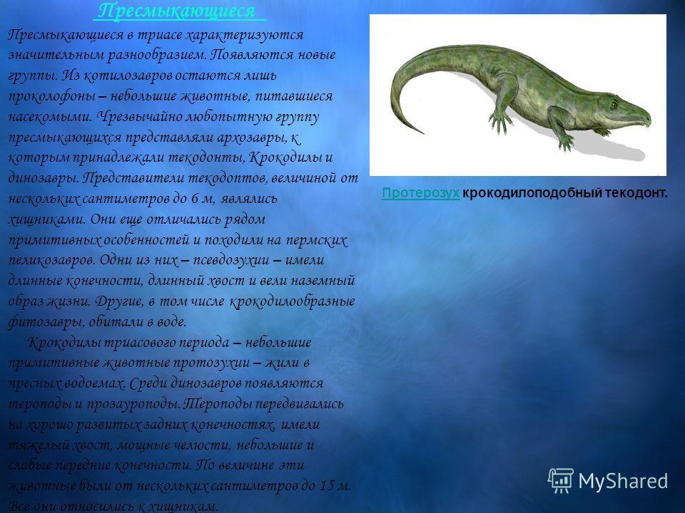 Пресмыкающиеся Пресмыкающиеся в триасе характеризуются значительным разнообразием. Появляются новые группы. Из котилозавров остаются лишь проколофоны – небольшие животные, питавшиеся насекомыми. Чрезвычайно любопытную группу пресмыкающихся представля